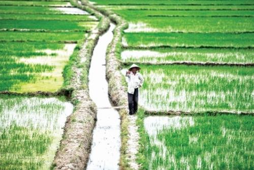 Ngành lúa gạo Việt Nam đứng trước giờ G