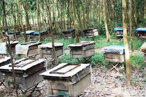 Người đam mê ong mật