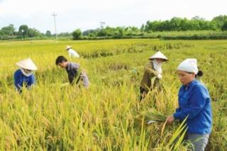 Tìm lời giải cho xuất khẩu gạo Việt Nam