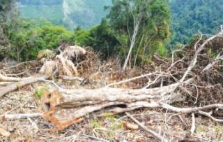 Giao rừng để… phá rừng?