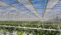 Nông nghiệp thu hút doanh nghiệp ngoại