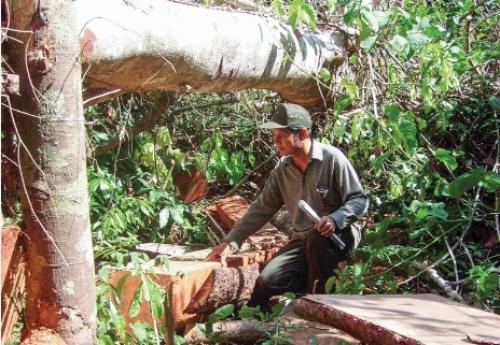 Nhức nhối phá rừng ở Quảng Nam