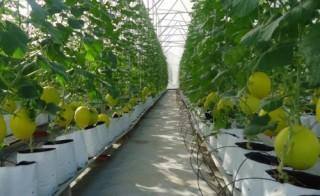 TP.HCM: Nông dân hào hứng ứng dụng công nghệ cao