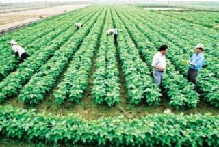Tín hiệu khả quan cho rau quả Việt