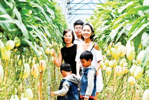 Du lịch nông trại: Điểm đến yêu thích của người thành phố