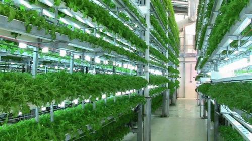 TP.HCM: Ngân hàng kết nối doanh nghiệp nông nghiệp sạch