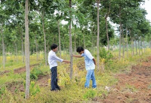 Sai phạm và lãng phí đất trồng rừng
