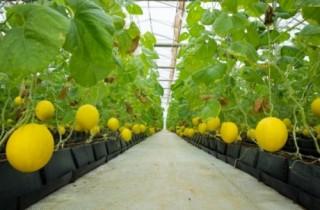 PAN Farm thu về 400 tỷ đồng từ đợt huy động vốn đầu tiên