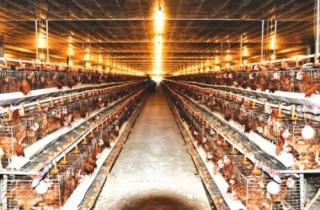 Từ trang trại vệ tinh đến thực phẩm sạch