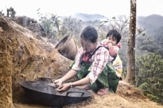 Trà Shan tuyết Làng Sáng