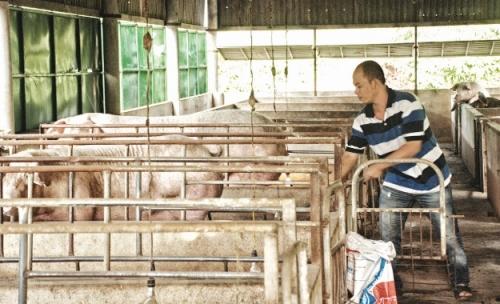 Để đảm bảo an ninh nông nghiệp