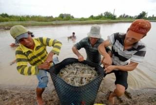 Nông sản Việt đứng trước FSMA