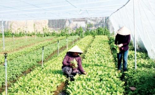 Hướng đến sản xuất nông sản an toàn