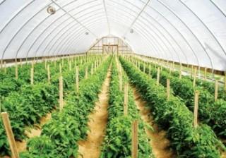 Nguy cơ nền nông nghiệp gia công