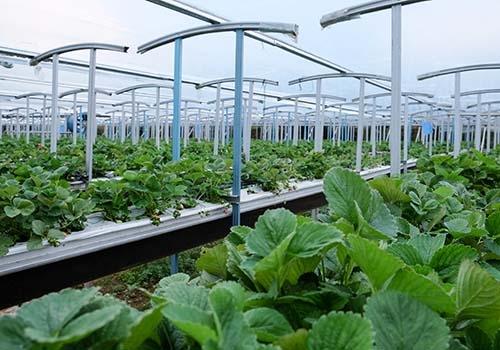 Chuyển vốn vào sản xuất nông sản sạch