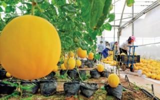 Tái cơ cấu Nông nghiệp: Vẫn thiếu chính sách