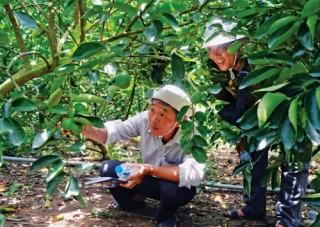 Phó Thống đốc Đào Minh Tú: Tài chính vi mô góp phần hạn chế tín dụng đen