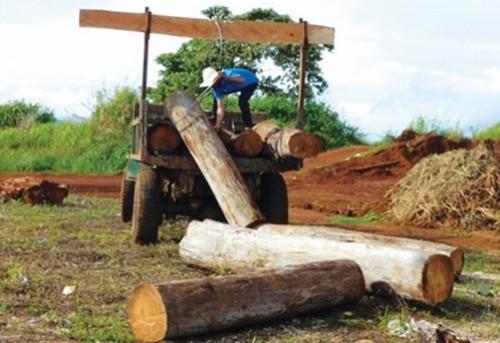 Thực trạng chiếm rừng thành đất nông nghiệp: Đâu rồi cả cây và đất?