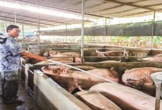 Agribank Đồng Nai: Đồng hành cùng người chăn nuôi vượt khó