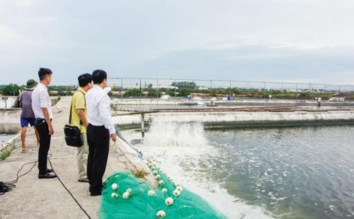 Agribank Móng Cái: Đầu tàu phát triển nông nghiệp, nông thôn