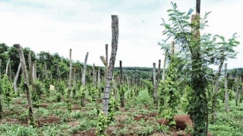 Đăk Nông lỏng lẻo quản lý rừng