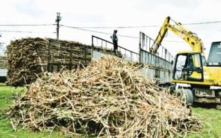 Nguy cơ mất cân đối trong sản xuất nông nghiệp?