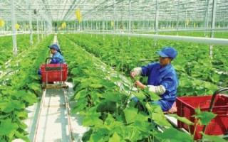Đòn bẩy đầu tư vào nông nghiệp nông thôn
