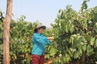 Nông nghiệp cần chính sách phát triển chiều sâu