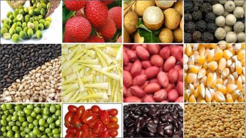 Nỗi niềm hàng nông sản công nghệ cao