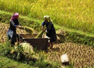 Giải đáp về thủ tục giảm tiền sử dụng đất cho hộ đồng bào dân tộc thiểu số