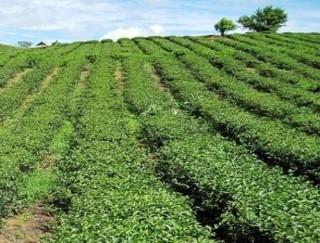 Giải đáp về ưu đãi cho DN đầu tư vào nông nghiệp