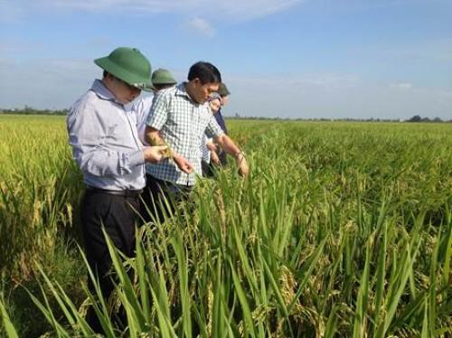 Chính sách cho người nông dân: Đã có nhưng chưa thỏa đáng