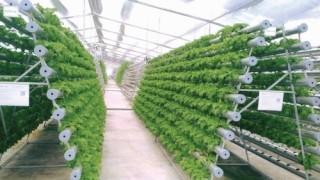 Ngành Ngân hàng Hà Nam: Khơi thông dòng vốn vào nông nghiệp công nghệ cao