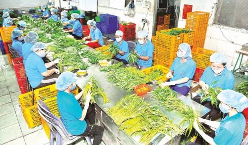 Xuất khẩu nông sản: Dồn lực để cán đích