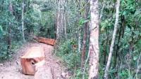 Mất rừng, xử lý cán bộ…