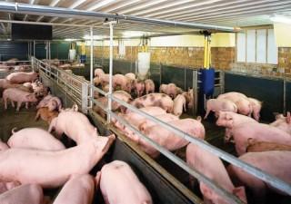 TP.HCM: Nhập khẩu thịt lợn tăng 4.800 tấn so với cùng kỳ