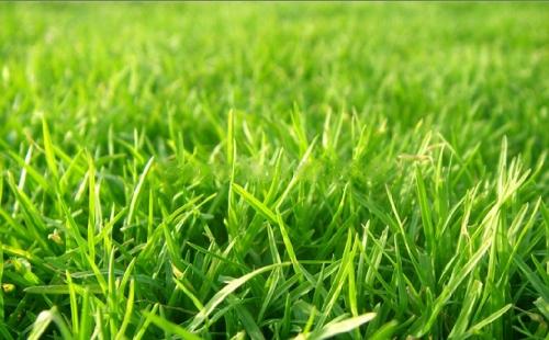 Nồng nàn hương cỏ...