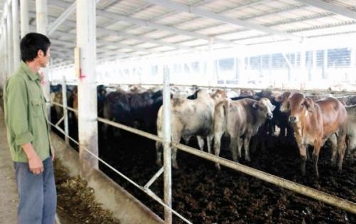 Thị trường thịt bò và lợi thế của hàng ngoại
