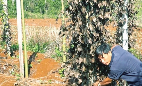 Báo động tình trạng phá hoại nông sản