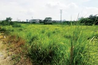 Tích tụ ruộng đất nâng cao chuỗi giá trị nông sản