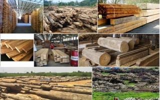 Doanh nghiệp ngành gỗ hướng tới phát triển bền vững