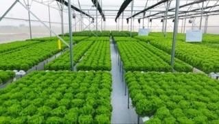 TP.HCM: Nỗ lực xây dựng chuỗi nông sản thực phẩm sạch