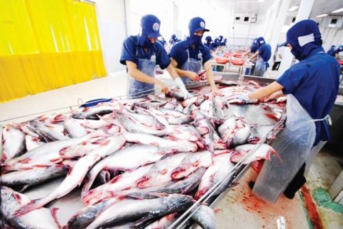 Xuất khẩu cá tra sang Trung Quốc: Cần hướng đến chính ngạch