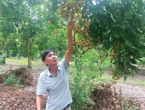 Phát triển mô hình HTX nông nghiệp kiểu mới: Thúc đẩy chuỗi nông sản