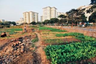 Để quy hoạch sử dụng đất trở thành động lực phát triển