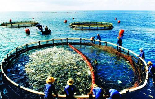 Vực dậy nuôi trồng thủy sản