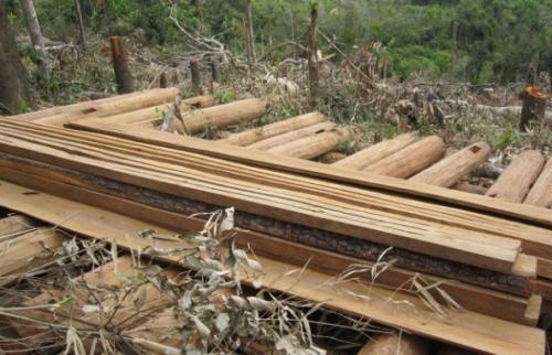 Vận chuyển gỗ trái phép