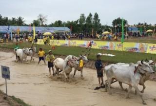 Nước tăng lực Number 1 tài trợ Hội Đua bò Bảy Núi