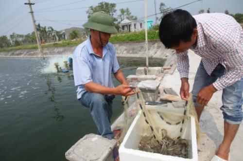 Ngành tôm Việt Nam có cơ hội mới
