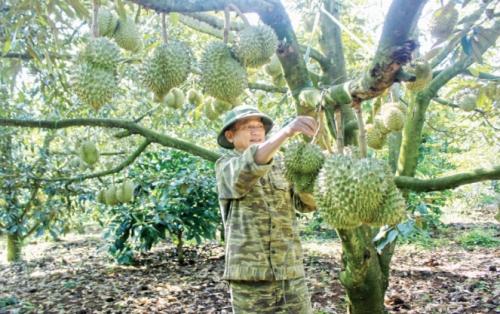 Nông dân lo trộm, bảo kê nông sản lộng hành